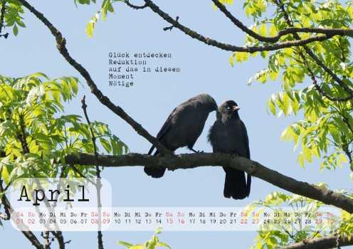 rabenkalender2017-v3-seite005